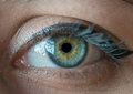 Human blue eye. Royalty Free Stock Photo