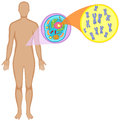 Human body and animal cell Royalty Free Stock Photo