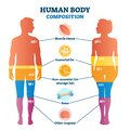 Human body composition infographic, vector illustration diagram Royalty Free Stock Photo