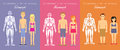 Human Body Constitution Flat Design Vector Concept Royalty Free Stock Photo