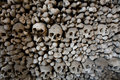Human bones and skulls Stock Image