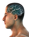 Human brain anatomy illustration d render Stock Photo