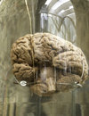 Human brain in boat Royalty Free Stock Photo