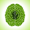 Human brain, green thoughts Royalty Free Stock Photo