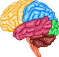 Human brain illustration of Stock Photo