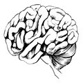 Human brain illustration of the on a white background Stock Photo
