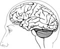 Human brain this image is a black and white vector illustration of a and can be scaled to any size without loss of resolution can Stock Photography