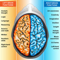 Human brain left and right functions Royalty Free Stock Image