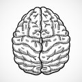 Human brain sketch Royalty Free Stock Photo