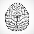 Human brain sketch Royalty Free Stock Photo