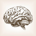 Human brain sketch style vector illustration Royalty Free Stock Photo