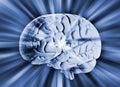 Human Brain With Streaks Of En...
