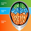 Human brain view top Royalty Free Stock Images