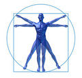 Human diagram vitruvian man isolated Royalty Free Stock Photos
