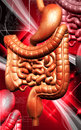 Human digestive system digital illustration of in colour background Stock Photography