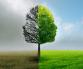 Human emotion mood disorder tree shaped as two human faces and with one half empty branches and opposite side full of leaves Royalty Free Stock Photos