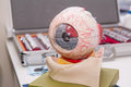 Human eye anatomy model on the background of set of corrective lens. Abstract background to ophthalmology concept. Selective focus Royalty Free Stock Photo