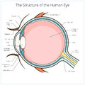 Human eye structure scheme vector Royalty Free Stock Photo
