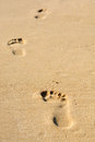 Human footsteps on atlantic fine beach sand Royalty Free Stock Photo