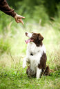 Human give command to dog a Stock Images