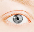 Human gray eye macro shooting Stock Image