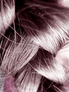 Human Hair - Close Up Royalty Free Stock Photo