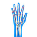 Human hand anatomy illustration d render Royalty Free Stock Photos