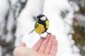 Human hand feeding the bird.harmony of nature Royalty Free Stock Photo