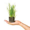 Human hand holding green grass Stock Photo