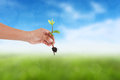 Human hand holding little tree with soil on blurred colorful grean grass Stock Photo
