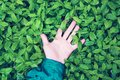 Human hand lies on green leaves with raindrops, the concept of unity of humanity with nature Royalty Free Stock Photo