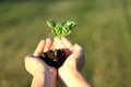 Human hands holding green small plant new life concept. Royalty Free Stock Photo