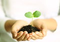 Human hands holding green small plant. new life concept. Royalty Free Stock Photo