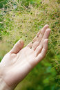 Human hands holding plant closeup of a Stock Photos
