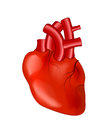 Human Heart Royalty Free Stock Image