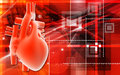 Human heart Stock Image