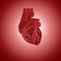 Human heart d rendering of Royalty Free Stock Photography