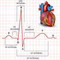 Human heart normal sinus rhythm and heart anatomy detailed medical illustration Royalty Free Stock Photography