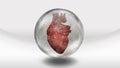 Human Heart In Sphere