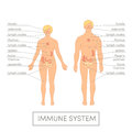 Human immune system Royalty Free Stock Photo