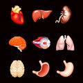 Human Internal Organs, on black Stock Photos