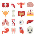 Human internal organs flat vector icons