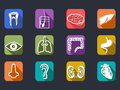 Human internal organs long shadow icons set