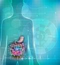 Human intestines anatomy background