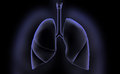 Human lungs digital illustration of in colour background Stock Photos