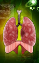 Human lungs digital illustration of in colour background Stock Image