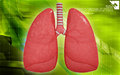 Human lungs digital illustration of in colour background Royalty Free Stock Images