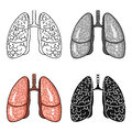 Human lungs icon in cartoon style isolated on white background. Human organs symbol stock vector illustration.