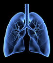 Human lungs isolated x ray effect Royalty Free Stock Image