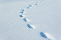 Human and mousy traces on snow Stock Images